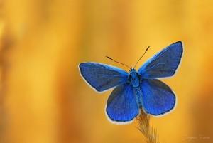 fluture 3
